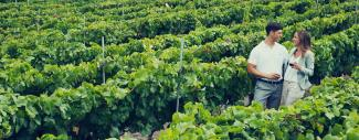 Tenerife Vineyard